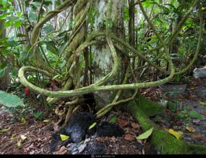 Ayahuasca Therapeutic Effects