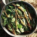 ayahuasca shaman healing