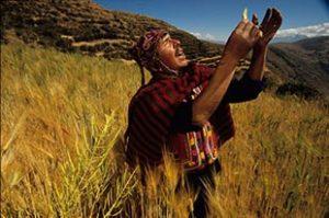 shaman ayahuasca