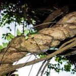 ayahuasca retreat - ayahuasca trip