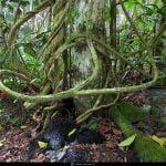 ayahuasca therapuetic